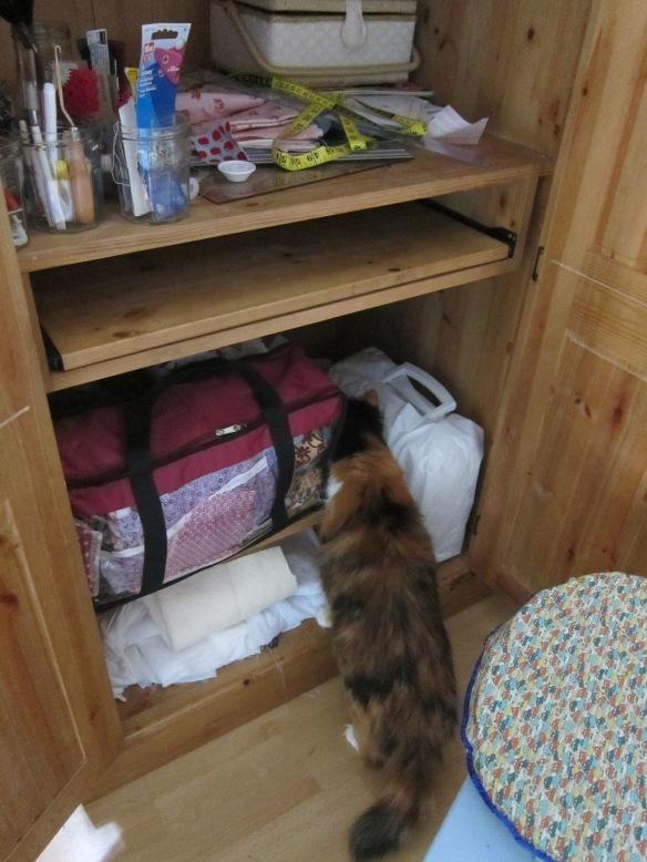 Cat in sewing cupboard