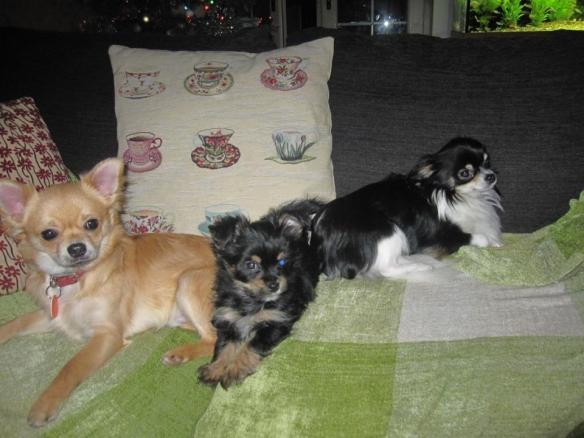 Clint, Nancy and Nacho